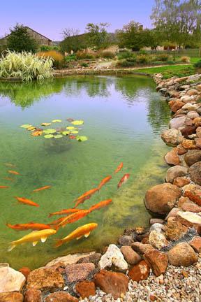 Entretien du bassin en mars vivre lamorlaye - Bassin de jardin nettoyage ...