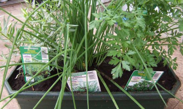 Et pourquoi pas une jardinière aromatique ?