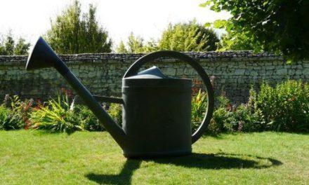 Les bons gestes pour arroser son jardin