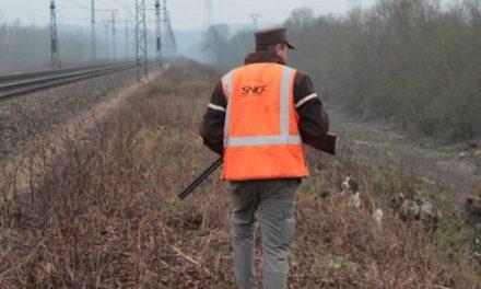 La SNCF contre les retards fait tuer les lapins et les blaireaux
